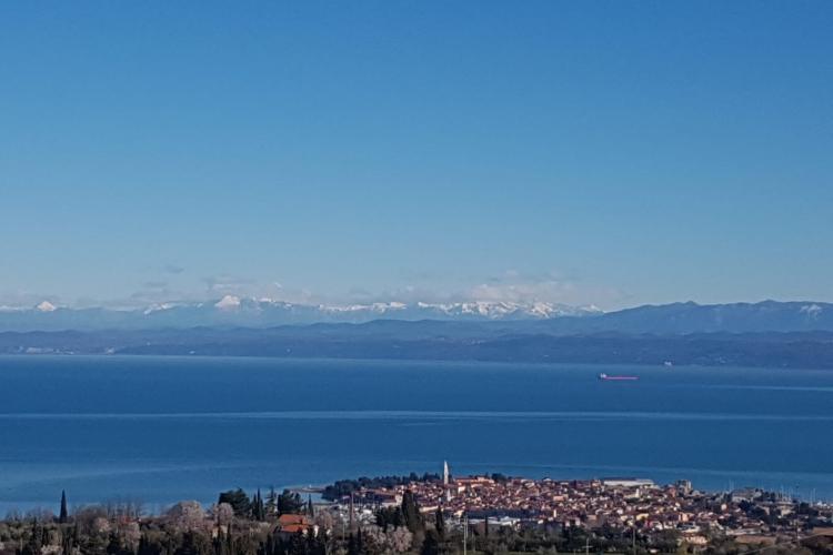 Lokacija: Obalno - kraška, Izola, Šared