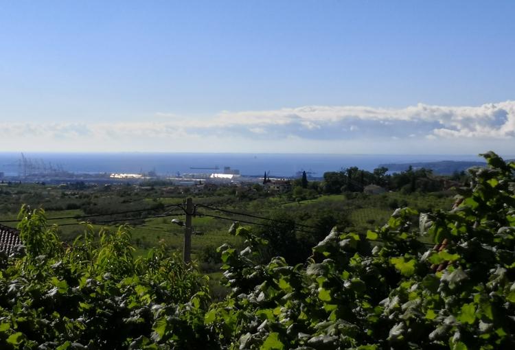 Lokacija: Obalno - kraška, Koper, Sveti Anton