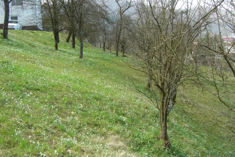 Lokacija: Ljubljana okolica, Borovnica, Breg pri Borovnici