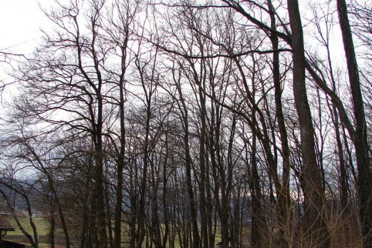 Lokacija: Ljubljana okolica, Brezovica, Podpeč