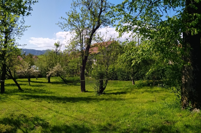 Location: Inner, Postojna