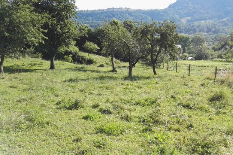 Lokacija: Notranjsko - kraška, Pivka, Narin