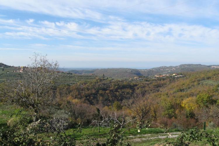 Lokacija: Obalno - kraška, Koper, Krkavče