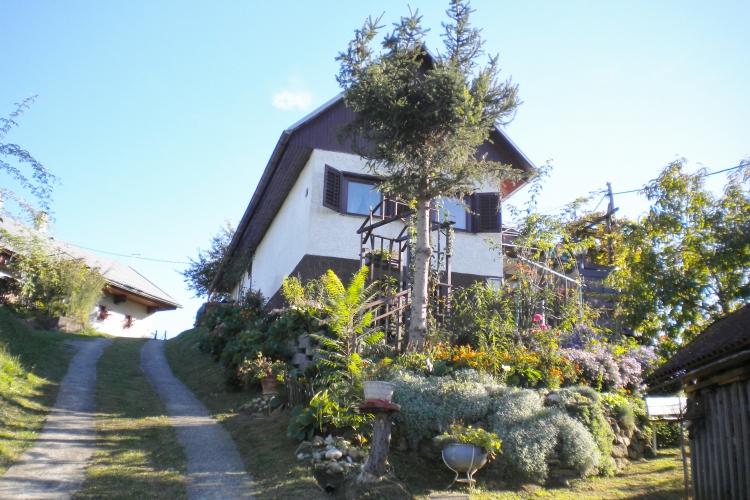Lokacija: Podravska, Zavrč