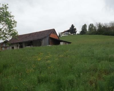 Lokacija: Podravska, Ptuj, Kicar