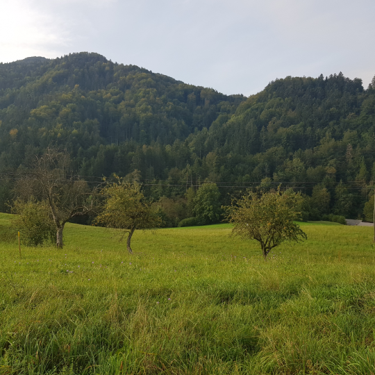Location: Upper Carniola, Kranj