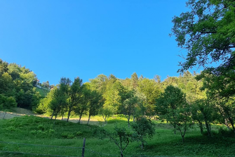 Lokacija: Jugovzhodna Slovenija, Šentrupert, Okrog