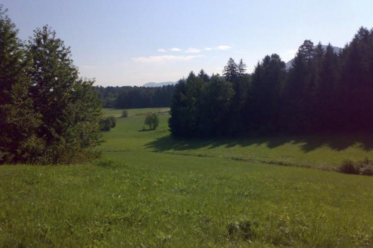 Lokacija: Savinjska, Prebold, Šešče pri Preboldu