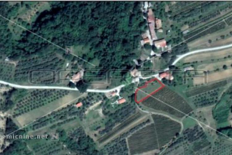 Lokacija: Hrvaška, Motovun